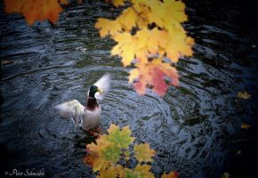 Autumn greeting. by Phototubby