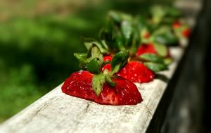 Strawberry Line Up by 37mm-Angel