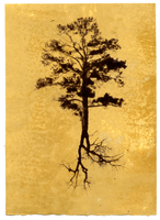 Tree I by justinelavoie