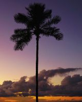 Sunset Palm by sHavYpus