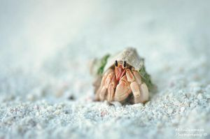 The brave little crab by Zelma1