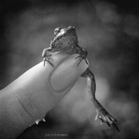 baby frog by paintmewet