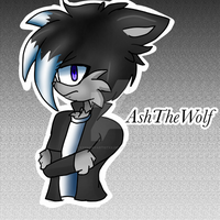 AshTheWolf by xXSnowyArtistXx