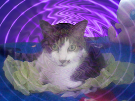 Hypnosis by Cat by Midday-Mew