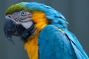 Longleat Parrot by garethjns