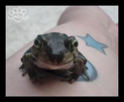 Happy Frog 2 by devildoll