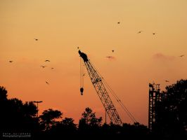 cranewithbirds by hatesymphony