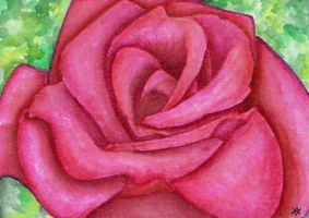 Rose - ACEO by Sofera