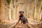 Champ of Auenwolf by BlackPepperPhotos