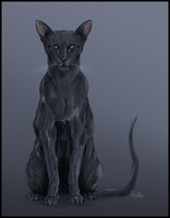 Crowfeather by Charlotte-Davis-Art