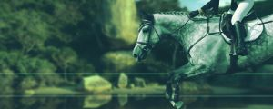 Horse Picture 294 by Spallyz