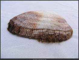Unrestricted Object Stock - Sea Shell 05 by shelldevil