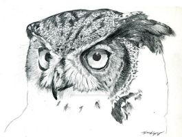 Owl Sketch by Sarbear12112