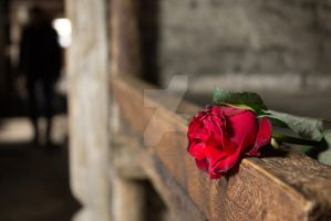 Rose, which was left behind by sleepytejal