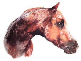 Appaloosa by LindseyTaylor