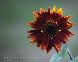 Buurst by andras120