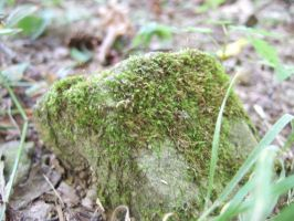 Moss on the Stone by Cwen-Natulcien