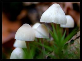 White Mushrooms by Pompography