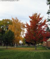 Fall Colors 1 by JLAT1990