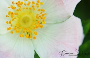 Yellow Specks of Sun by DYWPhotography