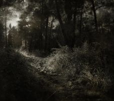 Path... by psdlights