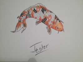 Jester the Koi by GreenEyedOkami