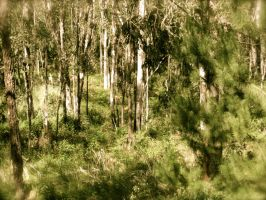 Gum Trees by wolfgal04