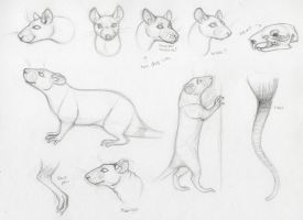 Rat Anatomy Practice by trik-s