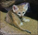 Baby sand cat -can you resist? by woxys