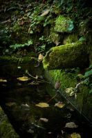 A green watering place by ReanDeanna
