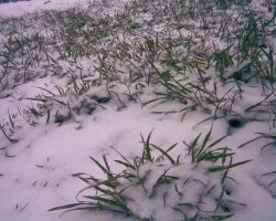 Snow and grass by rolandallen