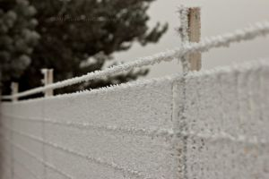 Frost-1-13c by melly4260