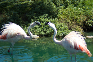 Pink Flamingos by Camel51