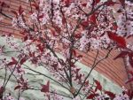 Pink And Red Branches by Rainbow826