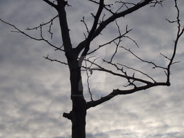 Tree And Sky by Pippistrella107