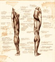 anatomy 1 by DariaGALLERY