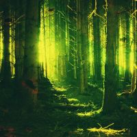 ...forest... by MozolewskiMichal