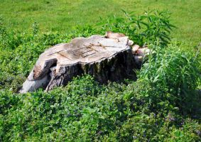 Stump Stock by DH-Textures