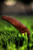 dead  HDR by photographersamer