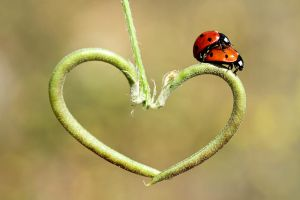 love by lisans