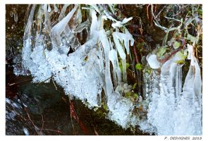 ice frogs by bracketting94