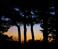 Tree silhouettes by tamigabriely