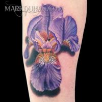 Bearded Iris by amduhan