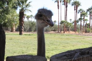 Ostrich by icantthinkofaname-09