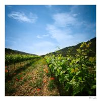 Vineyard - Color by Hgonzag