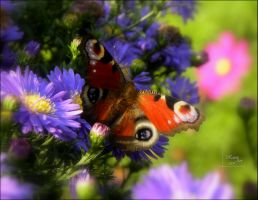 Surrounded by color by Buble
