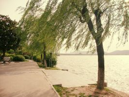 Trees by the lake by Laura-in-china