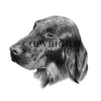 Flatcoat Retriever by stevej061069