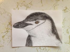 Chinstrap Penguin by imagineBeyondReality