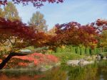 japanese garden Bonn 12 by ingeline-art